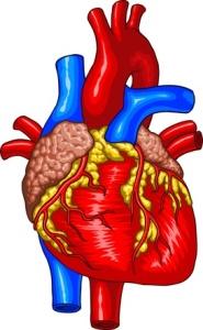 zawa mięśnia sercowego